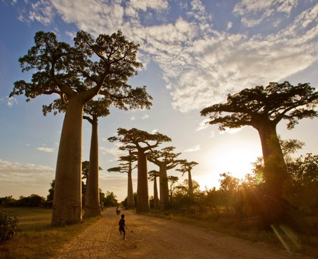 Scenes From Baobab Alley In Madagascar